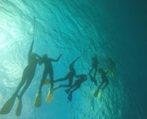 Heron Island Marine Studies Trip